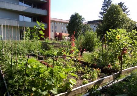 WG Urban Gardening 2